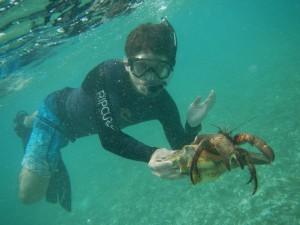 Enormous hermit crab.